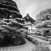 Even zen-er in black & white