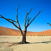 Ancient trees in Deadvlei.  The trees are 900 years old and they've been dead for 300 years since a dune cut off the ephemeral Tsauchab River from watering them and created Sossusvlei