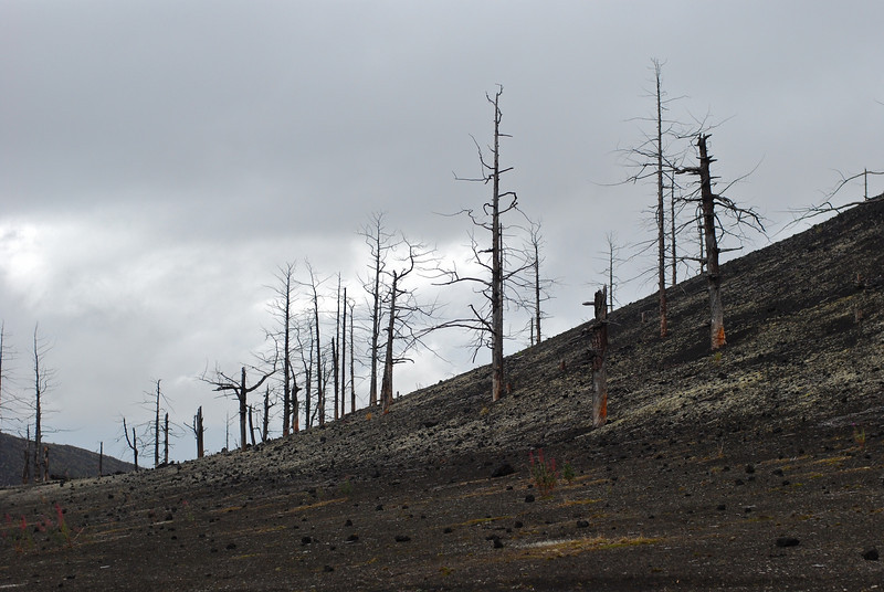 Burned forest on Tolbachik.  There used to be lots of trees here until 1976 when the volcano exploded