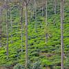 Tea under the trees