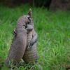 Frisky lizards
