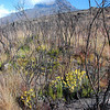 As you go up the forest turns into scrub and eventually that thins out too into an alpine flora