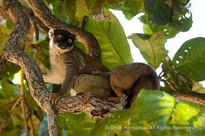 060529_DSC_2266_Lemur