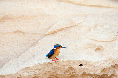 060524_DSC_1476_Kingfisher