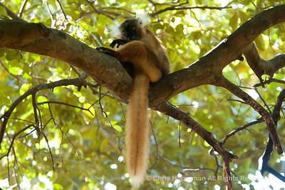 060529_DSC_2149_Lemur