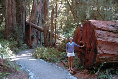 Cathie in the Redwood Forest, California