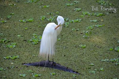 Corkscrew Swamp Sanctuary, Naples