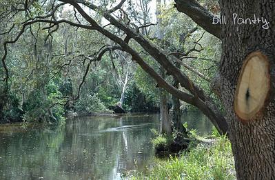Tampa, Fern Cliff Hillsborough River
