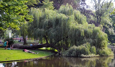 cooling out in Vondel Park, Amsterdam
