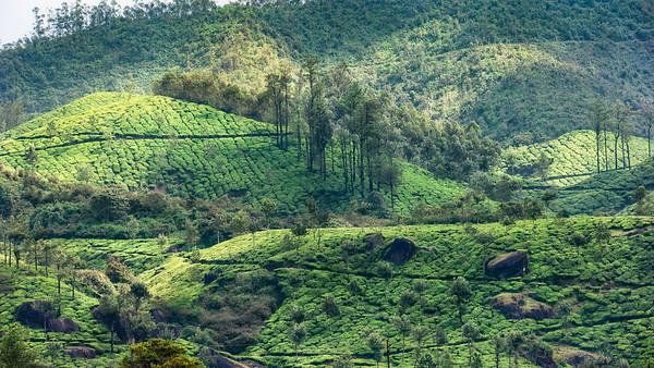 Kerala 22