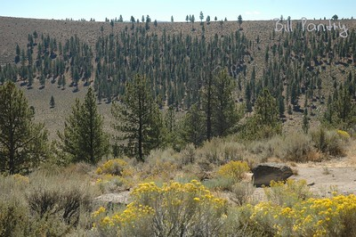 Hole-in-the-ground, a maar in Fort Rock Basin, Lake County, Oregon