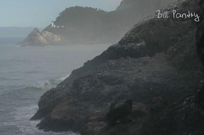 Heceta Head Lighthouse from Sea Lion Point, Oregon Coast Hwy