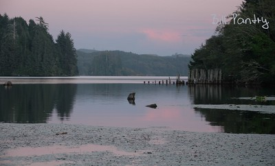 from Public Dock on Tahkenitch Lake, Weed Island in the left background