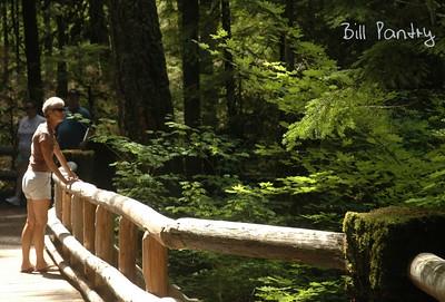 Willamette National Forest, McKenzie Highway