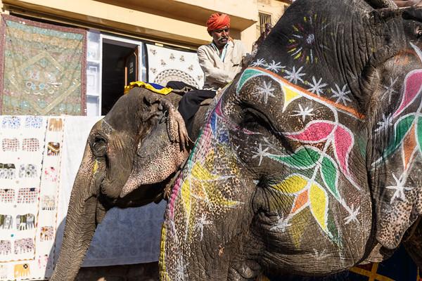 Jaipur 19
