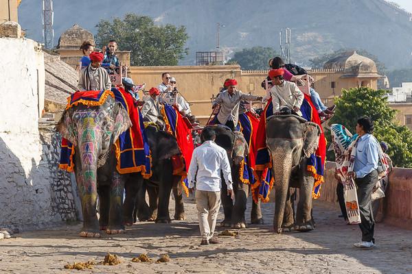 Jaipur 15