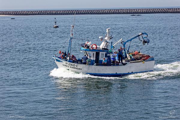 Oporto-Hf-008