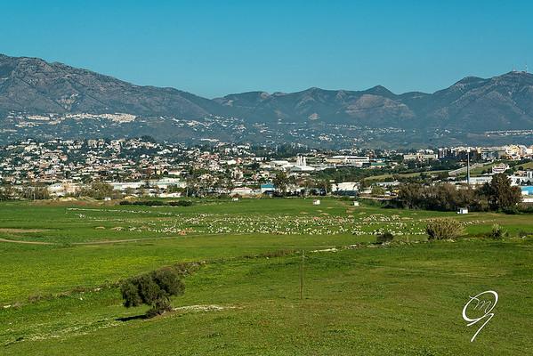 1800 ovejas en Mijas