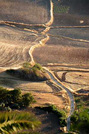 Country lane in evening sunshine, Ronda