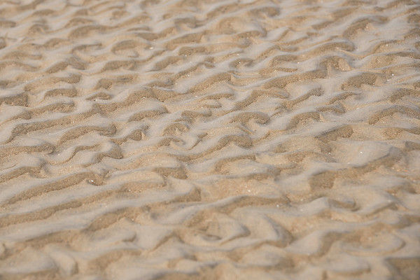 Sand ripples, Winchelsea