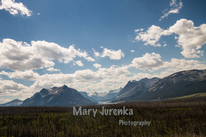 I took this from the car as we were crossing the park on Going to the Sun Road in Glacier National Park.