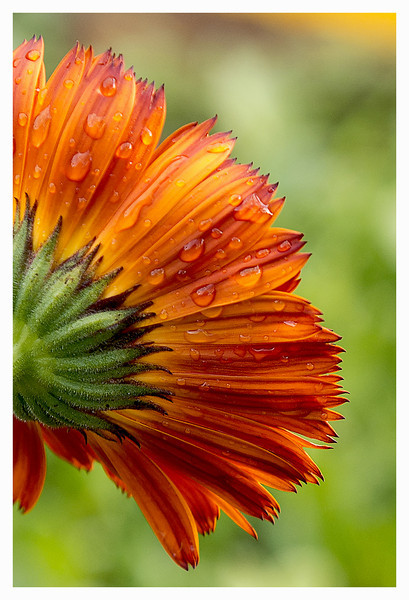 Drops in the terrace garden