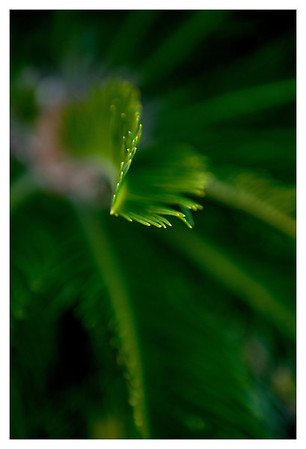 Palm plant in Scott and Susan's backyard