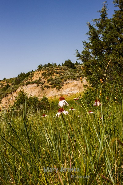 This was taken in Roosevelt National Park in July 2013.