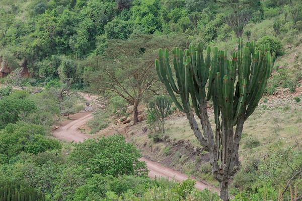 Driving down NgoroNgoro Crater