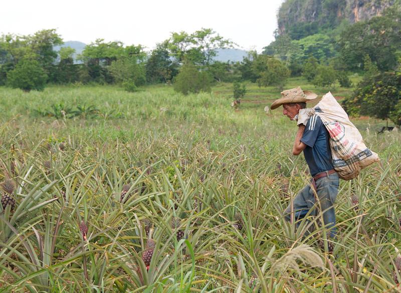 Vinales: Organic Farm