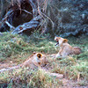 KEN1984060056 - Kenya, Amboseli NP, 6-1984