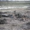 KEN1984060053 - Kenya, Amboseli NP, 6-1984