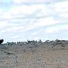 KEN1984060037 - Kenya, Nairoboi to Amboseli NP, 6-1984