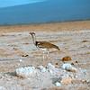 KEN1984060045 - Kenya, Amboseli NP, 6-1984