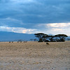 KEN1984060042 - Kenya, Amboseli NP, 6-1984