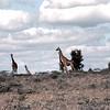 KEN1984060034 - Kenya, Nairobi to Amboseli, 6-1984
