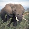 KEN1984060050 - Amboseli NP, Kenya, 6-1984