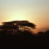 KEN1984060023 - Kenya, Amboseli NP, Kenya, 6-1984