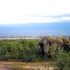 KEN1984060049 - Kenya, Amboseli NP, 6-1984