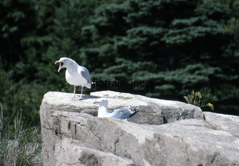 USA1982090175 - USA, Acadia NP, Maine, 9-1982