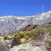 USA1980120049 - USA, Guadalupe Mountains NP, Texas, 12-1980