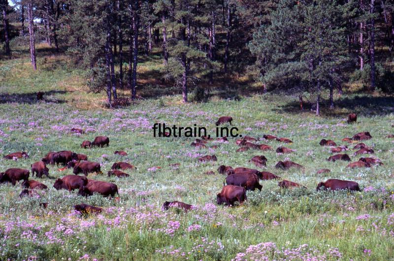 USA1999080003 - USA, Custer SP, South Dakota, 8-1999