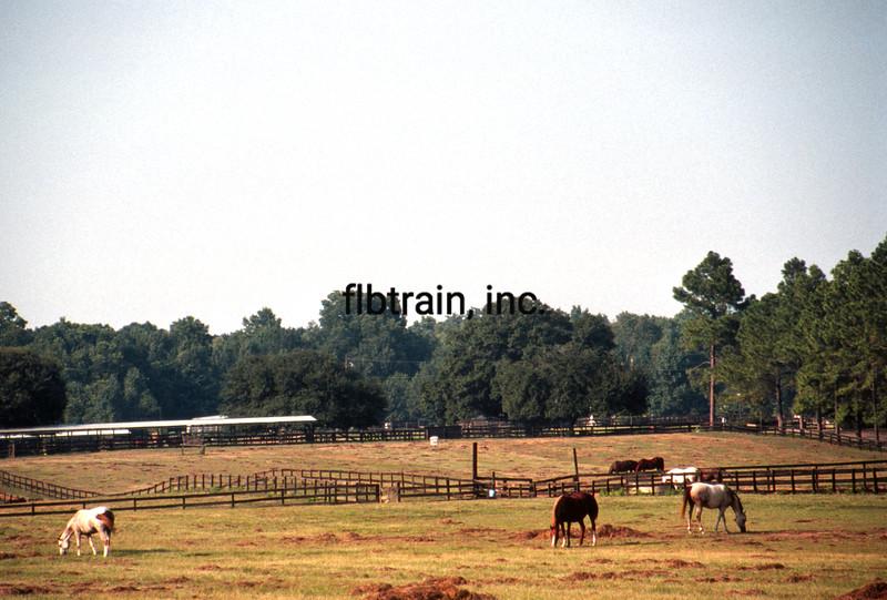 USA1987090003 - USA, Bayou Black, Louisiana, 9-1987