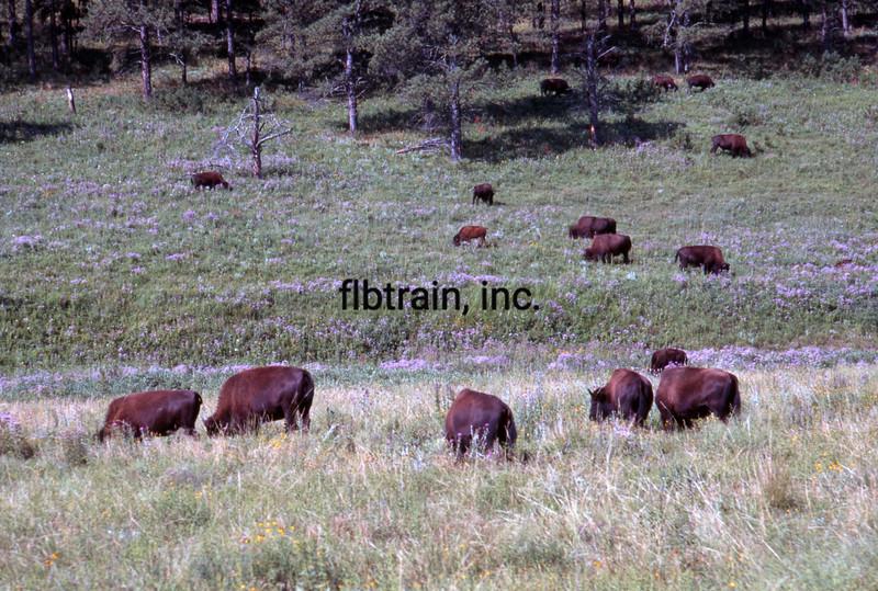 USA1999080007 - USA, Custer SP, South Dakota, 8-1999