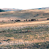 USA1974090052 - USA, Wind Cave NP, South Dakota, 9-1974