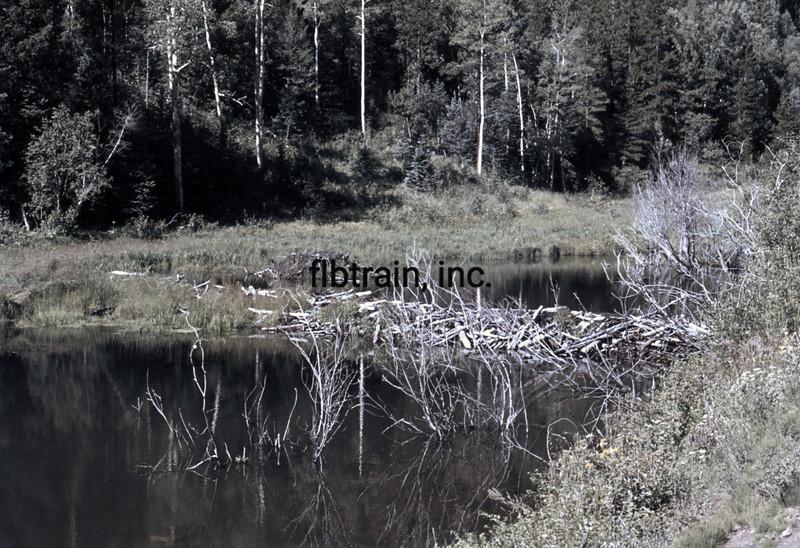 USA1976080196 - USA, Golden Gate Canyon SP, Colorado, 8-1976
