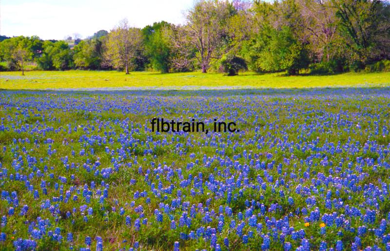 USA1990040001 - USA, Brenham, Texas, 4-1990