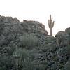 USA2004030010 - USA, Arizona, Florence Junction, 3-2004