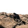 USA1976080284 - USA, Mount Evans, Colorado, 8-1976