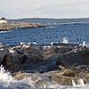 USA1982090182 - USA, Acadia NP, Maine, 9-1982